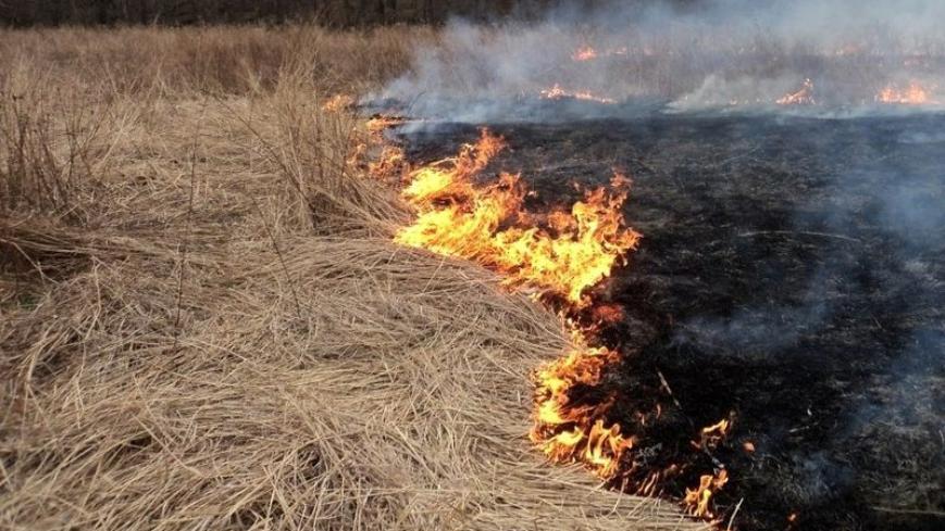 ARiMR przypomina - wypalanie traw grozi utratą dopłat