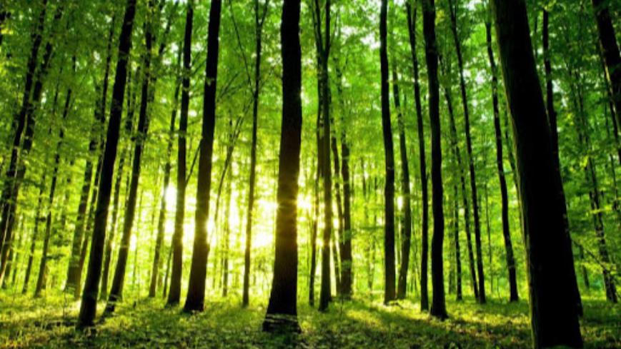 Weź pieniądze i posadź las - wkrótce ruszy nabór wniosków