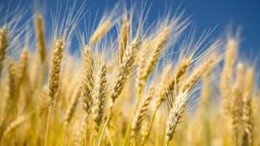 Giełdowy Rynek Rolny
